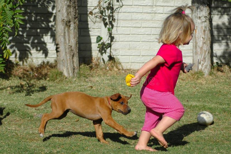 Animal familier d'enfant et de chiot photos stock