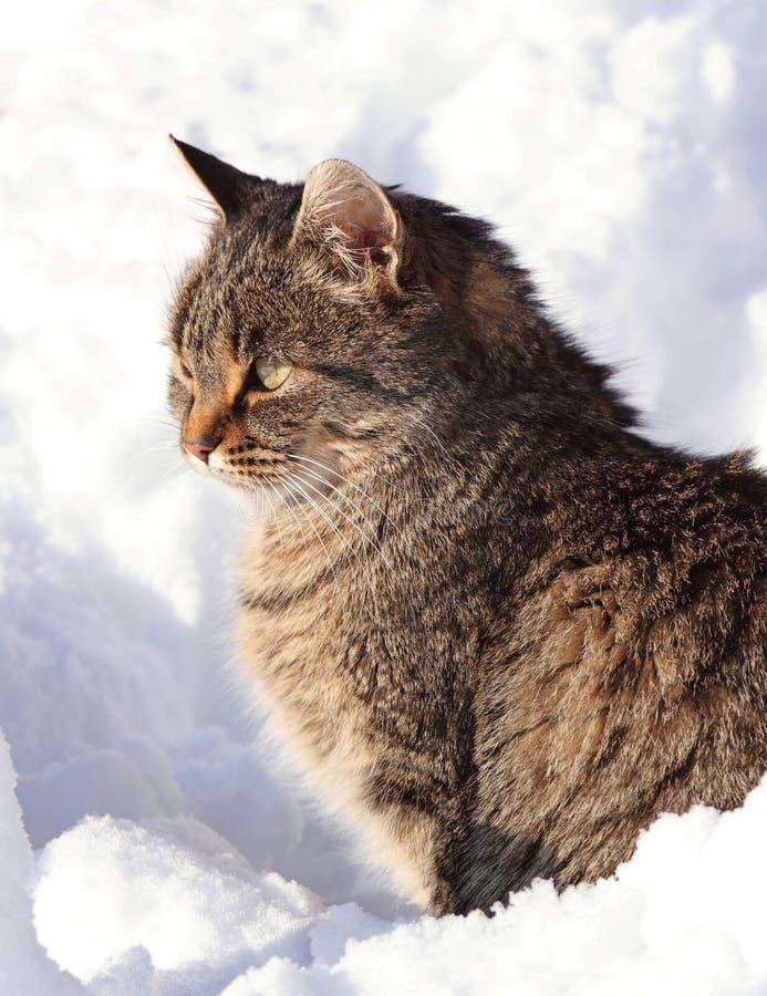 Animal familier dans la neige photos libres de droits