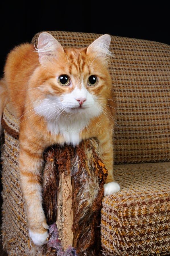 Animal familier et meubles image stock