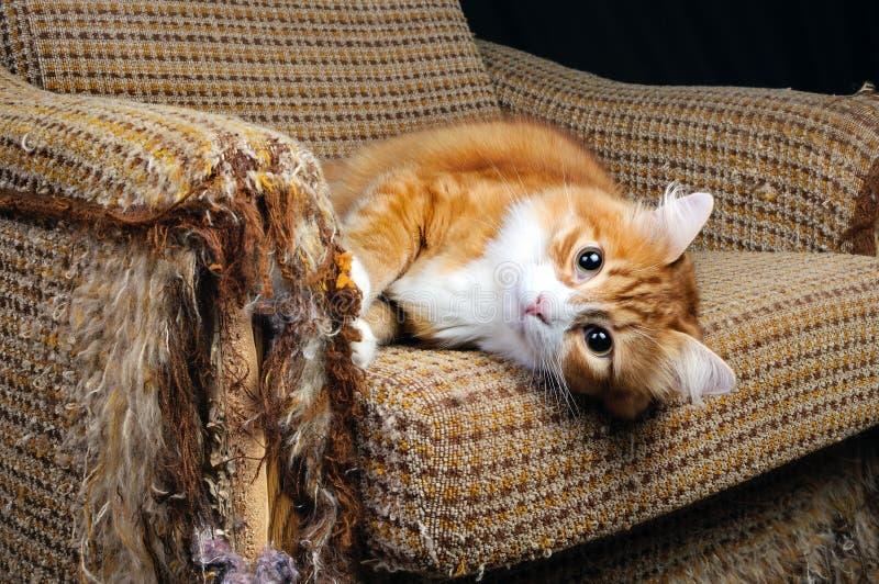 Animal familier et meubles images stock