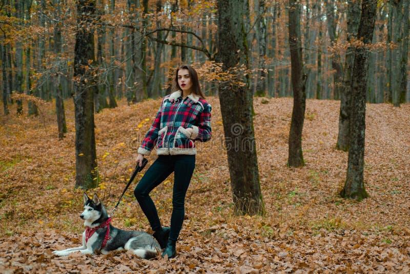 Animal familier pr?f?r? enrou? sib?rien production animale Jolie femme élégante de fille marchant avec la forêt enrouée d'automne photos stock