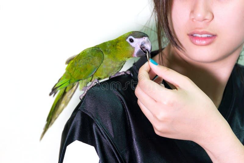Animal familier vert mignon d'oiseau d'ara sur la femme d'épaule photographie stock