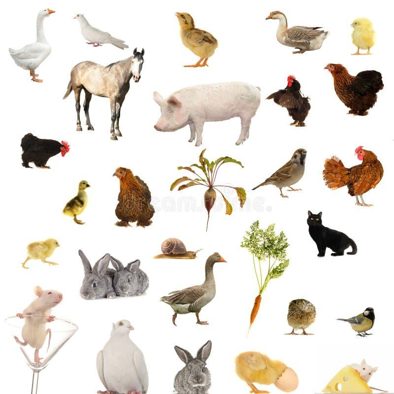 Animal farms stock photography