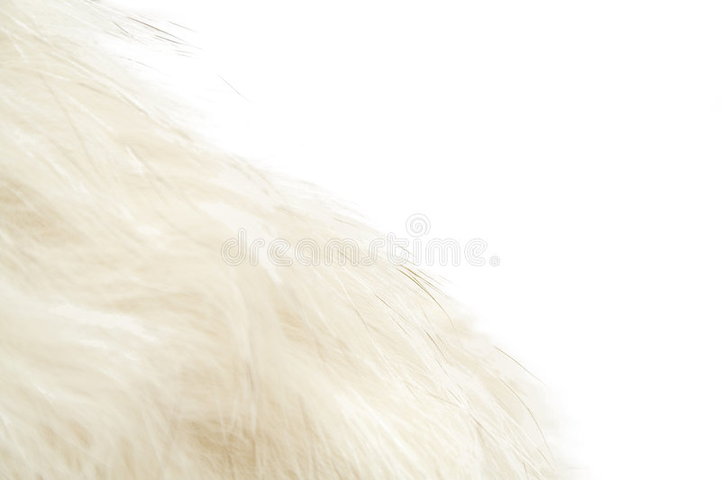 Download Animal fluff stock photo. Image of grey, material, fuzz - 4451420
