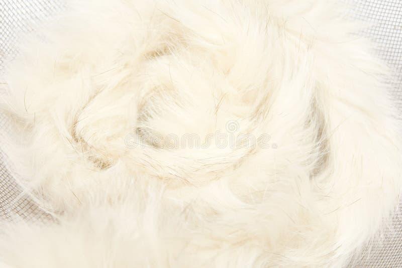 Animal Fluff Stock Photography