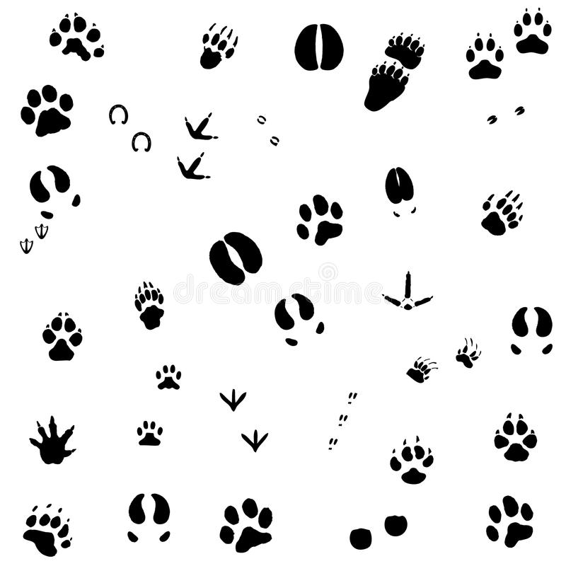 Animal foot prints. Collection of animal foot prints