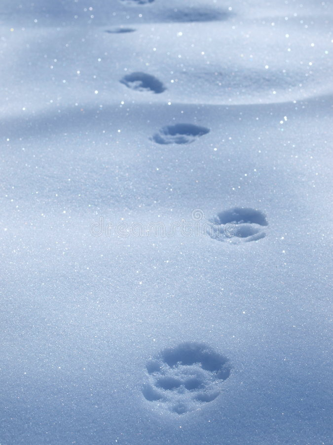 Free Animal Foot Prints Stock Photos - 8195603