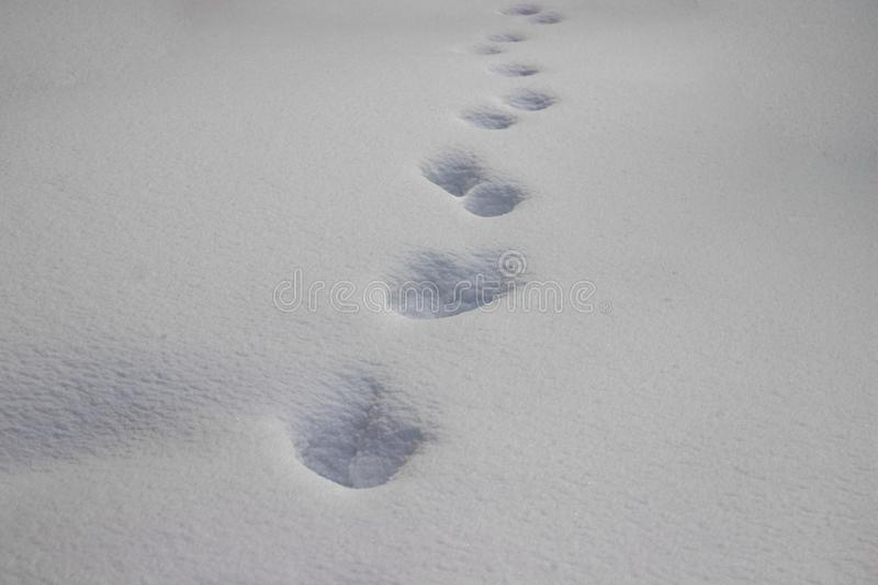 Animal footprints on snow stock photography