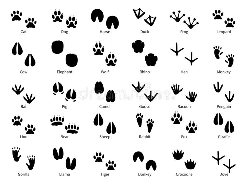 45+ Mud With Animal Track In It Clipart