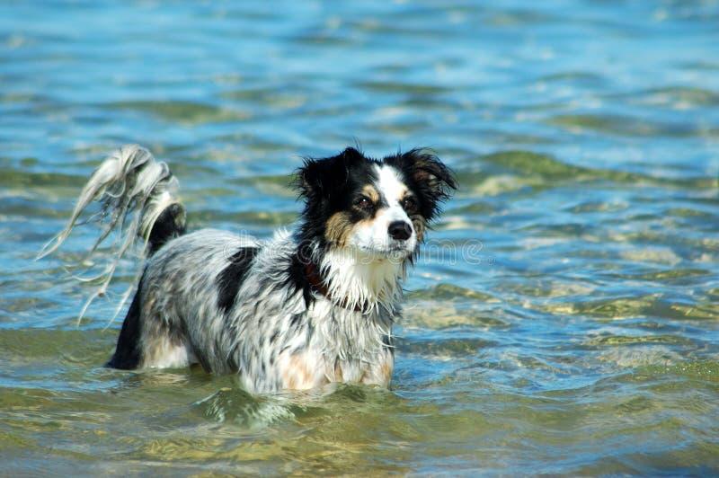 Download Animal fun stock photo. Image of fresh, holidays, gorgeous - 1674272