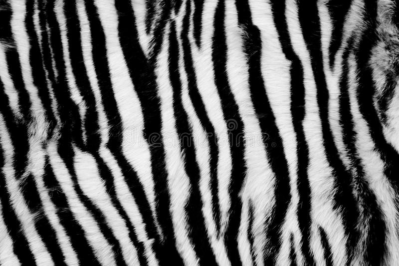 Animal Fur Background royalty free stock images