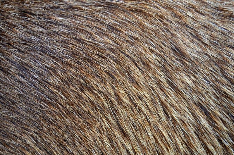 Animal Fur Background royalty free stock image