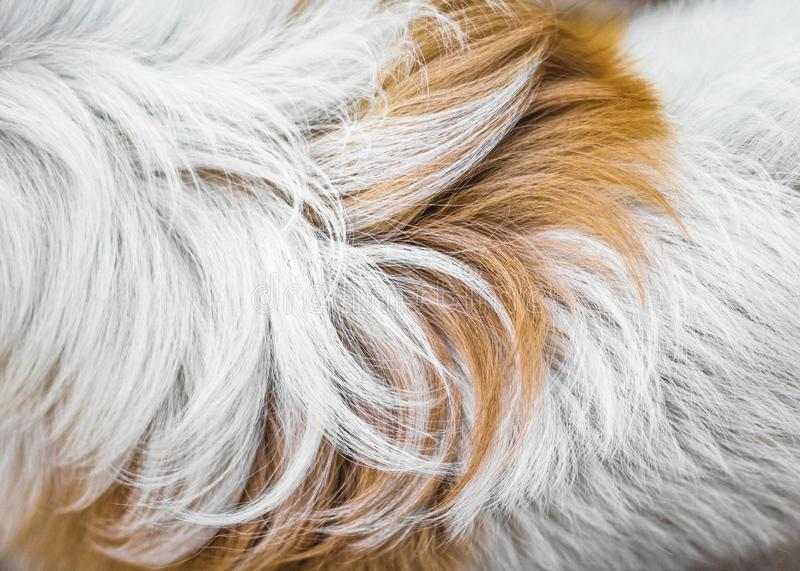 Animal fur background texture. Abstract dog fur in brown and white colors. Animal fur background texture. Abstract dog fur in brown royalty free stock photos