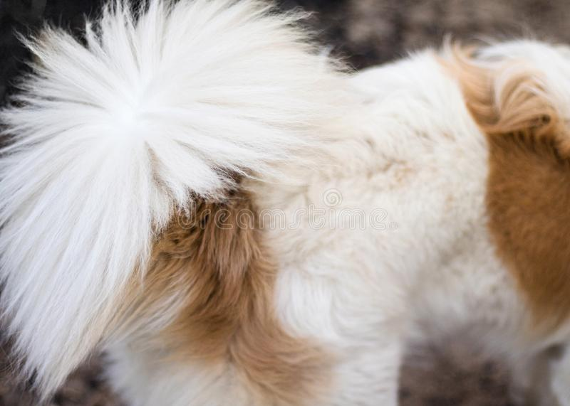 Animal fur background texture. Abstract dog fur in brown and white colors. Dog stock photo