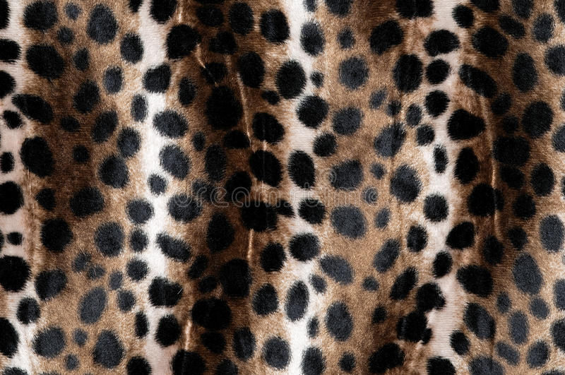Animal fur (close-up). Leopard spots (close-up) chief of production stock image