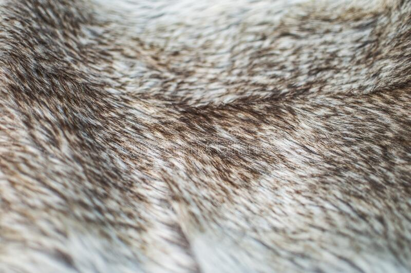 Animal fur. Close up picture of animal fur texture royalty free stock photo