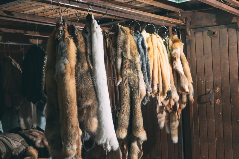 Animal fur. foxes, raccoon, wolf, beaver, mink, nutria hanging after processing. royalty free stock photos