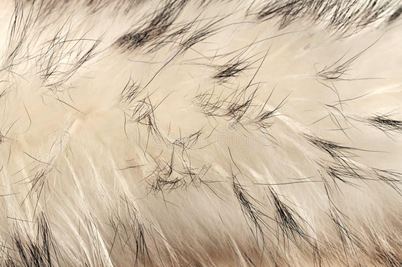 Animal fur texture background. / 11 royalty free stock photos