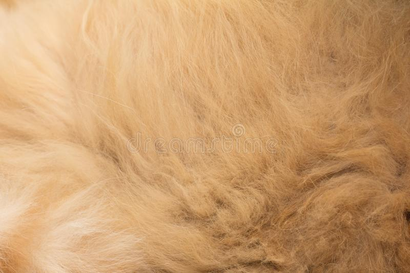 Animal fur texture background. Photo of an abstract texture stock images