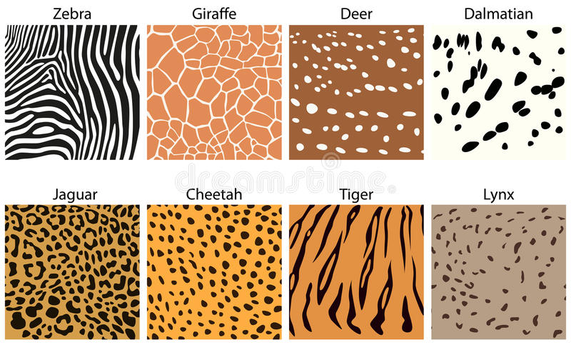 Animal fur textures. A collection of animal fur textures vector illustration