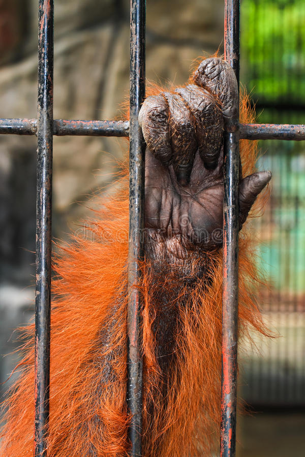 Download Animal hand stock image. Image of exhibit, catch, chain - 21433365