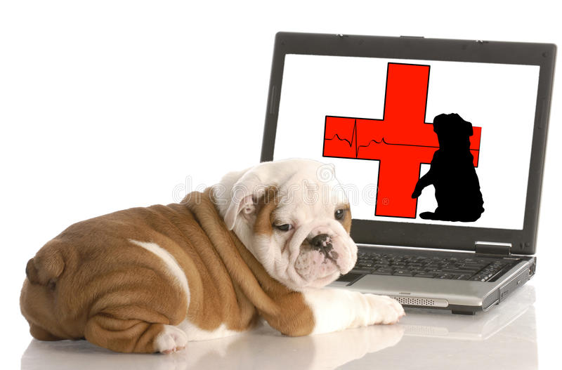Animal health online. Looking for animal health information online