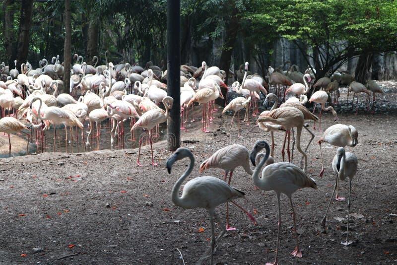 Animal hermoso del flamenco del primer en los parques p?blicos foto de archivo