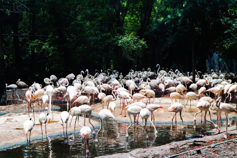 Animal hermoso del flamenco del primer en los parques p?blicos imagenes de archivo