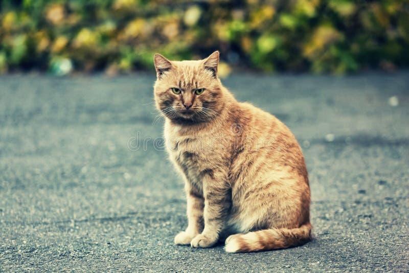 Animal, hermoso, gato, lindo, nacional, felino, piel, gatito, imagen de archivo libre de regalías