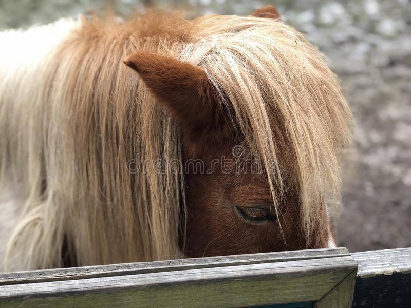 Animal horse portrait. Horse animal portrait eye catcher royalty free stock images