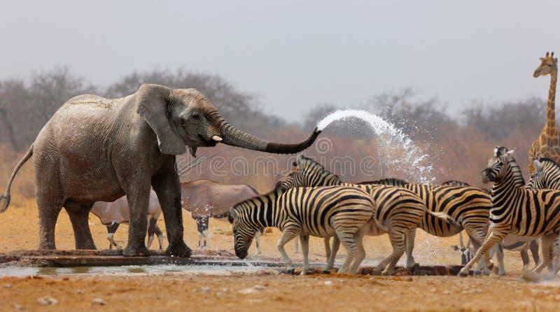 Download Animal humour stock photo. Image of humorous, wildlife - 14921868