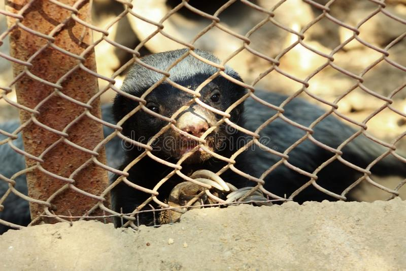 Animal inocente dentro de um jardim zoológico foto de stock