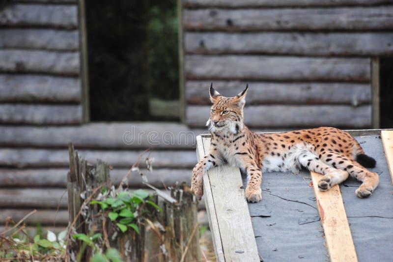 Animal joven fotografía de archivo libre de regalías