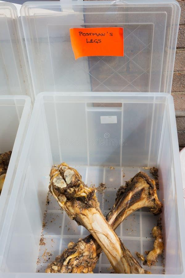 Animal leg bones in plastic container. Animal leg bones on sale in plastic container royalty free stock photography