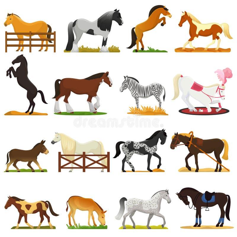 Animal lindo del vector del caballo de la historieta de la caballo-cría o del ejemplo ecuestre y de caballo o equino del semental ilustración del vector