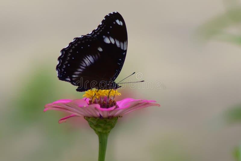 Animal, macro, mariposa, flor fotos de archivo libres de regalías