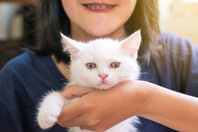 Animal mignon pelucheux blanc écossais de femme de chat heureux de participation petit image libre de droits