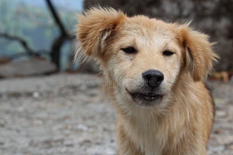 animal modelo del amor del boekh de Dog foto de archivo