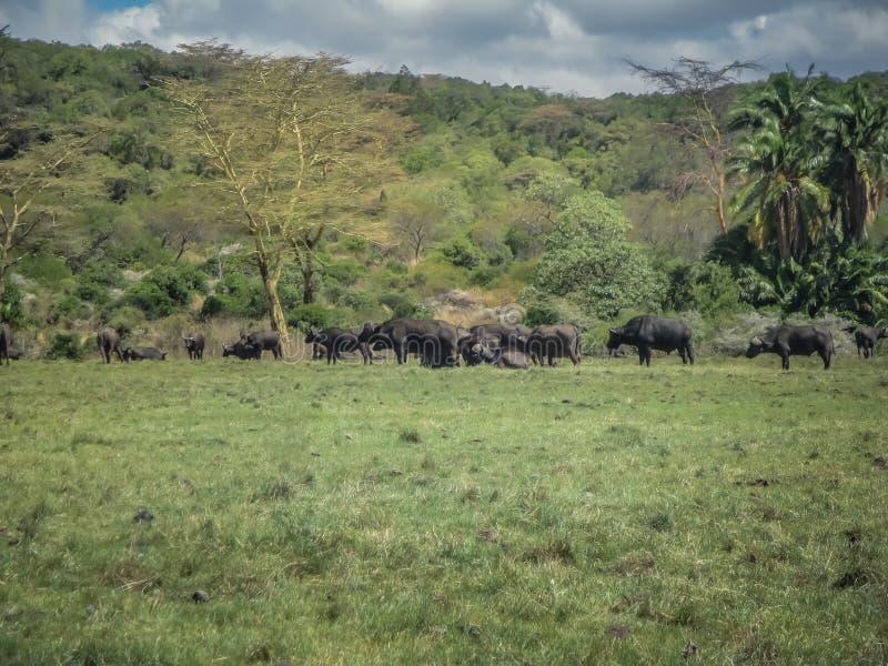 Animal nature and wildlife group of different herbivore animals stock photo