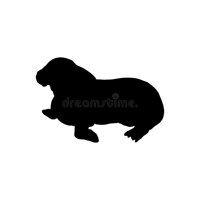 Animal negro ártico de la silueta de la morsa de Cub ilustración del vector