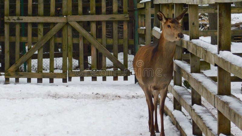 animal no jardim zoológico fotos de stock royalty free