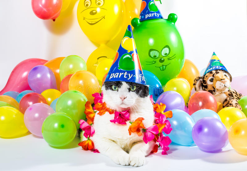 Cat. Black and white cat in animal party surrounded by colorful balloons, with hat and Hawaiian flower necklace, on white background