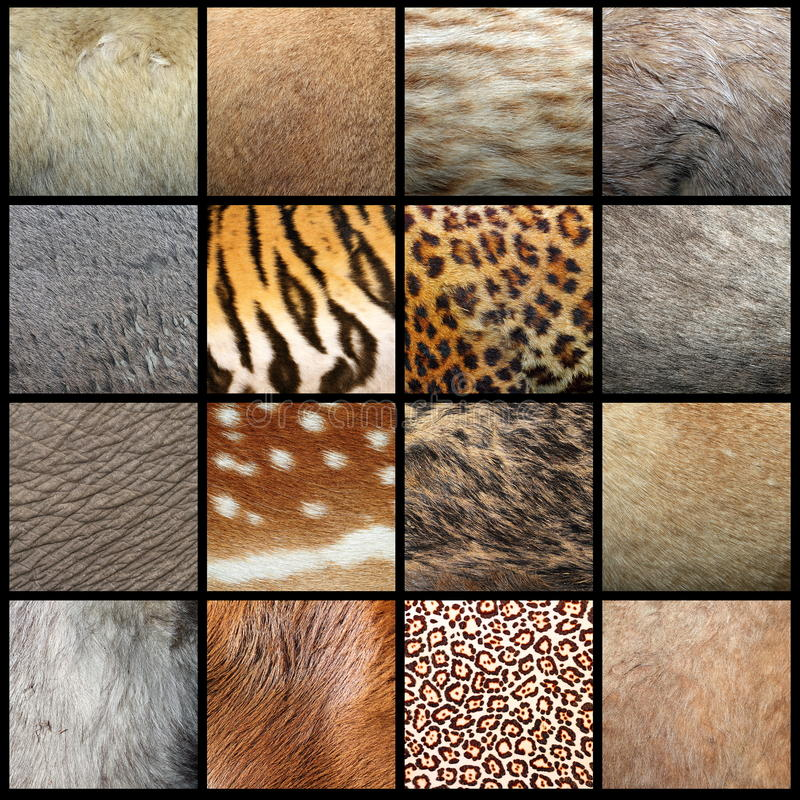 Animal pelts collection. Large collection of animal pelts, real fur royalty free stock image
