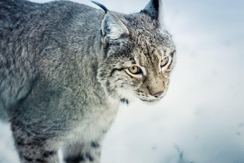 Animal, Animal, Photography, Big royalty free stock images
