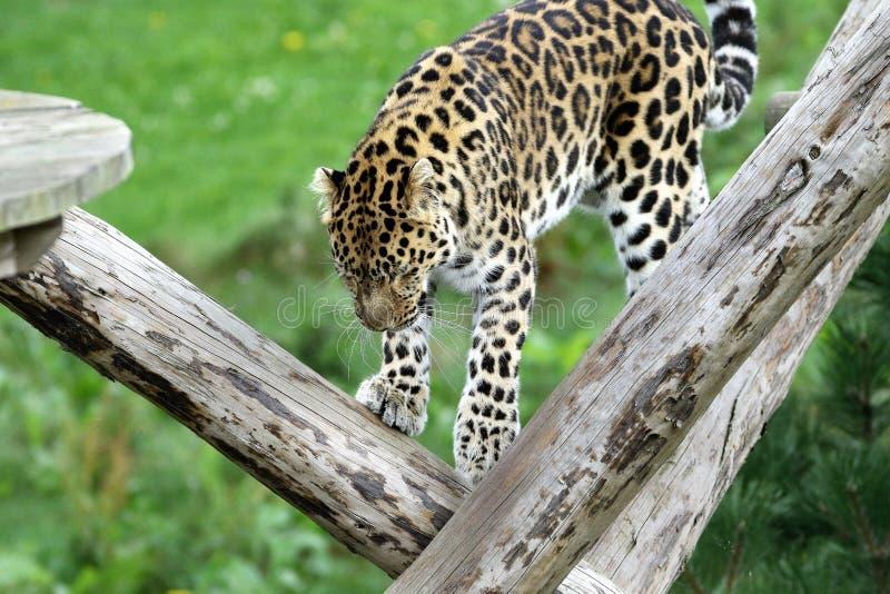Animal, Photography, Big royalty free stock photography