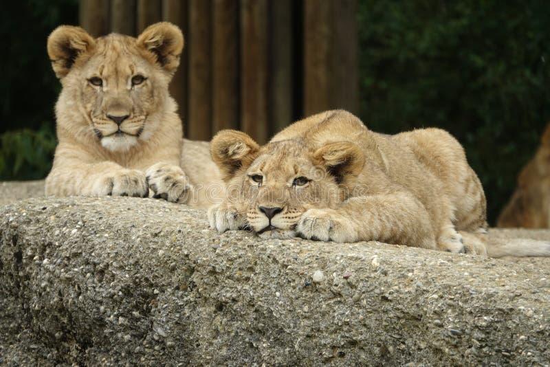 Animal, Photography, Big stock image
