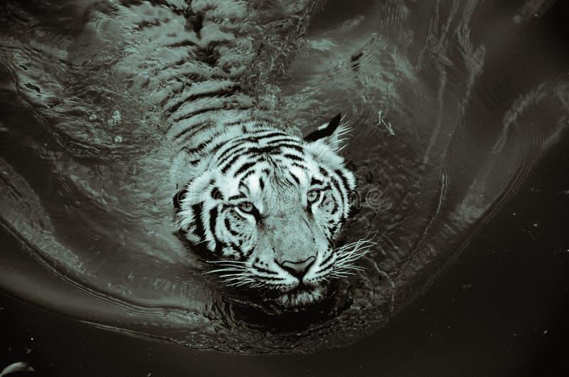 Animal, Photography, Big stock images