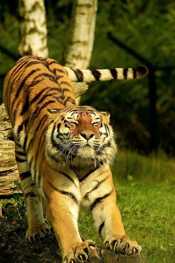 Animal, Photography, Big royalty free stock image