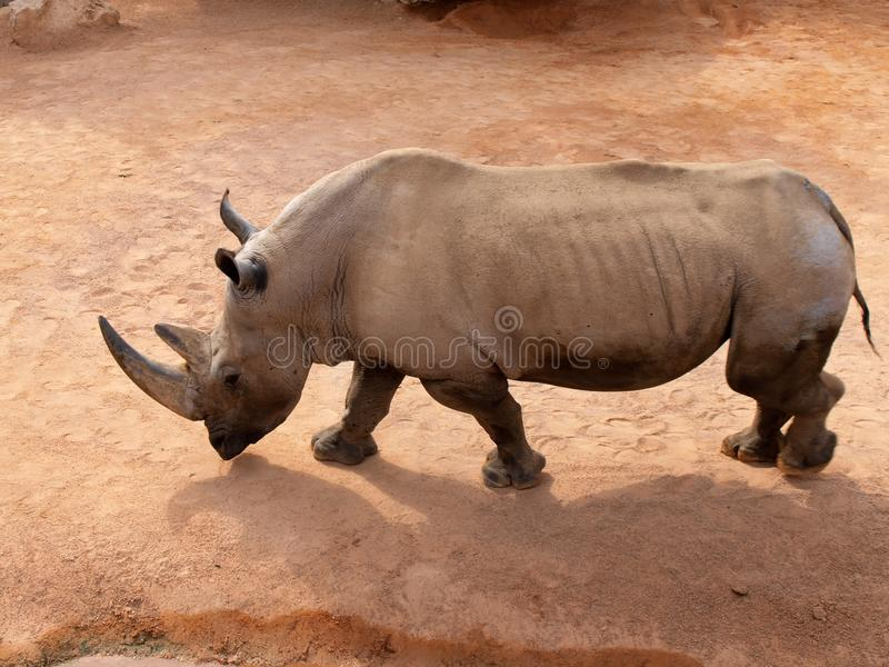 Animal, Photography, Big royalty free stock photo
