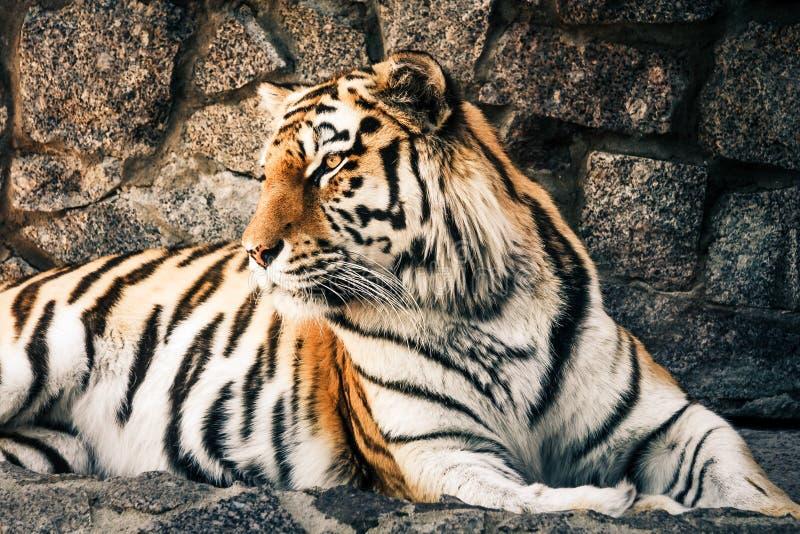 Animal, Photography, Big stock photo